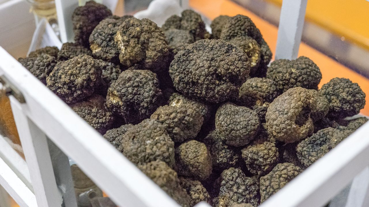 Looking for agents/distributors of high-quality Italian truffles