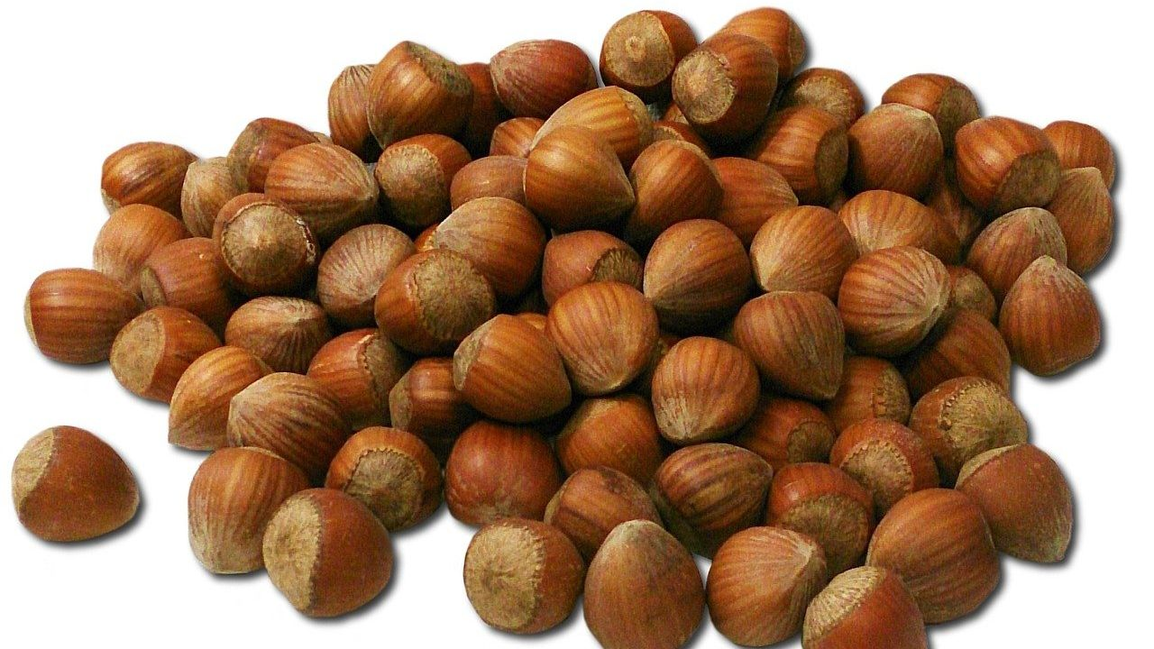 Turkish producer of natural diabetic hazelnut paste looking for European distributors