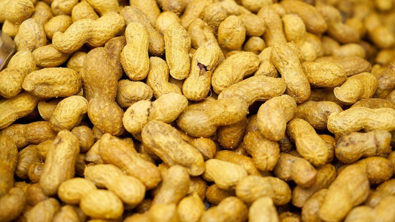 Singapore peanut products manufacturer seeks European partners via distribution agreement