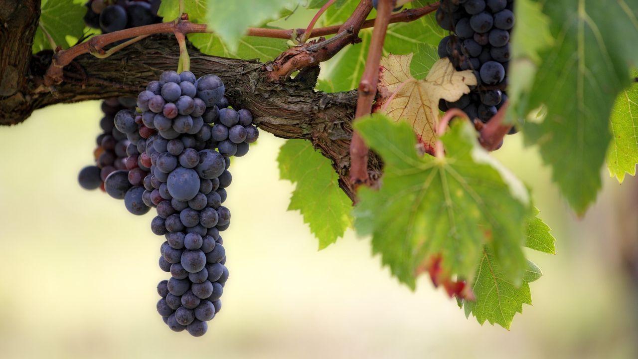 Armenian winery seeks agents and distributors