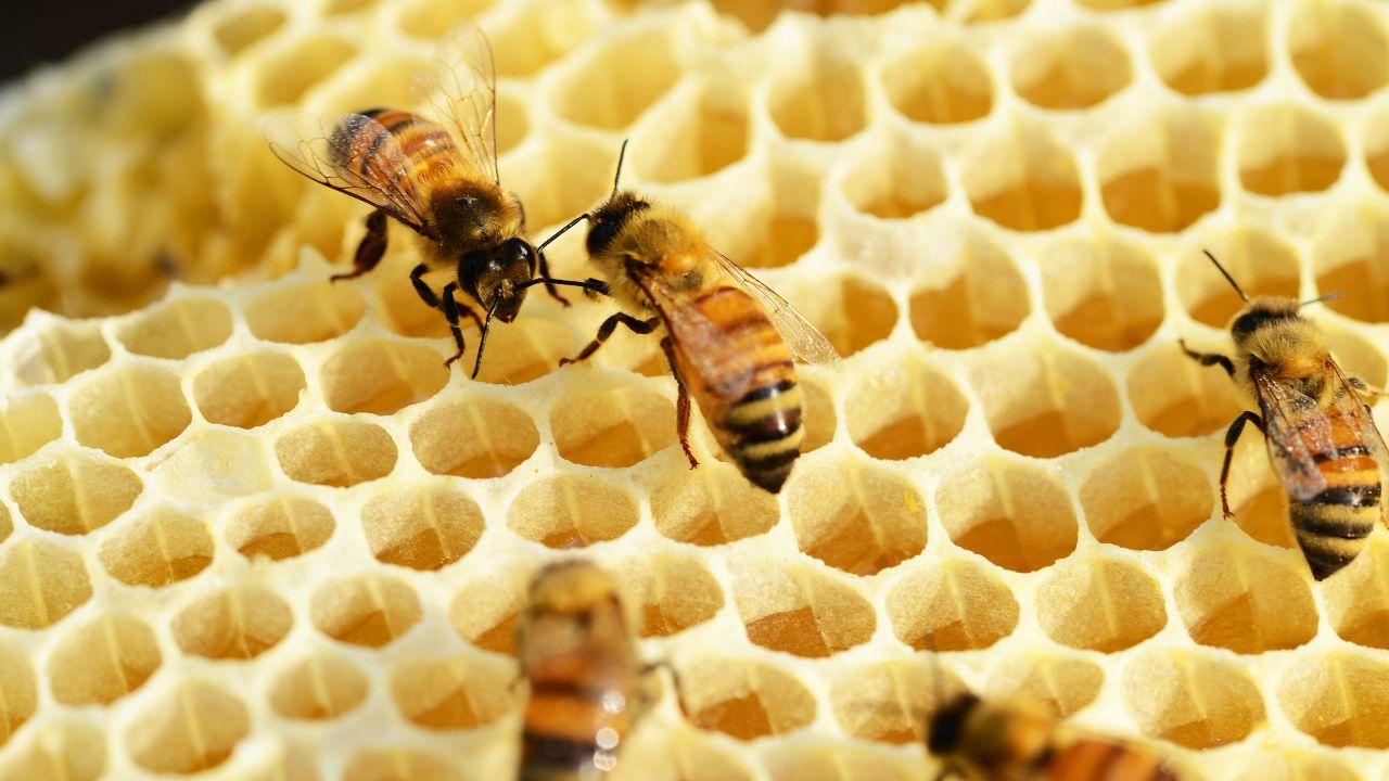 Organic honey producer seeks distributors in EU