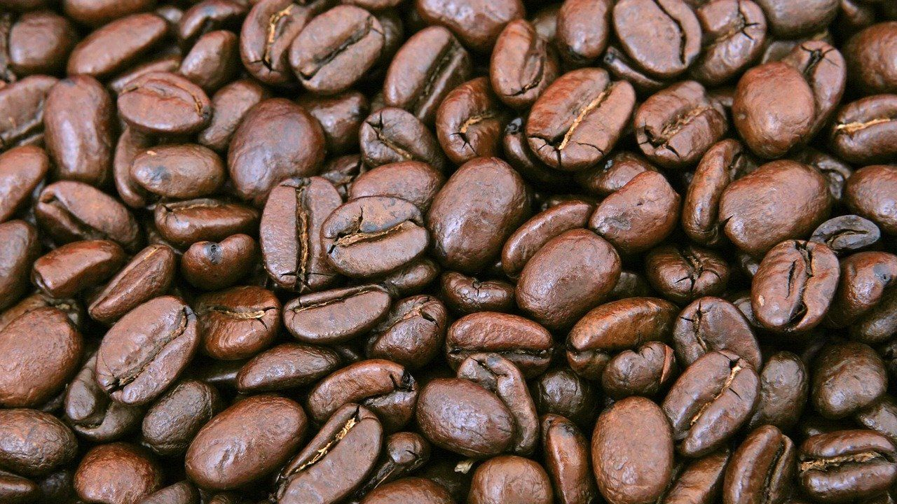 Coffee roasting and high-quality coffee producer looking for distributors