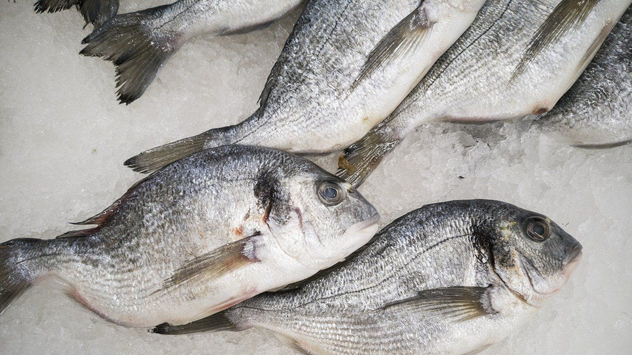 Portuguese processor and exporter of fish (fresh and frozen) seeking distributors