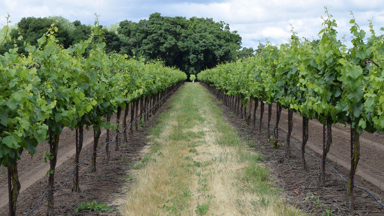 Italian winery seeks international distributors