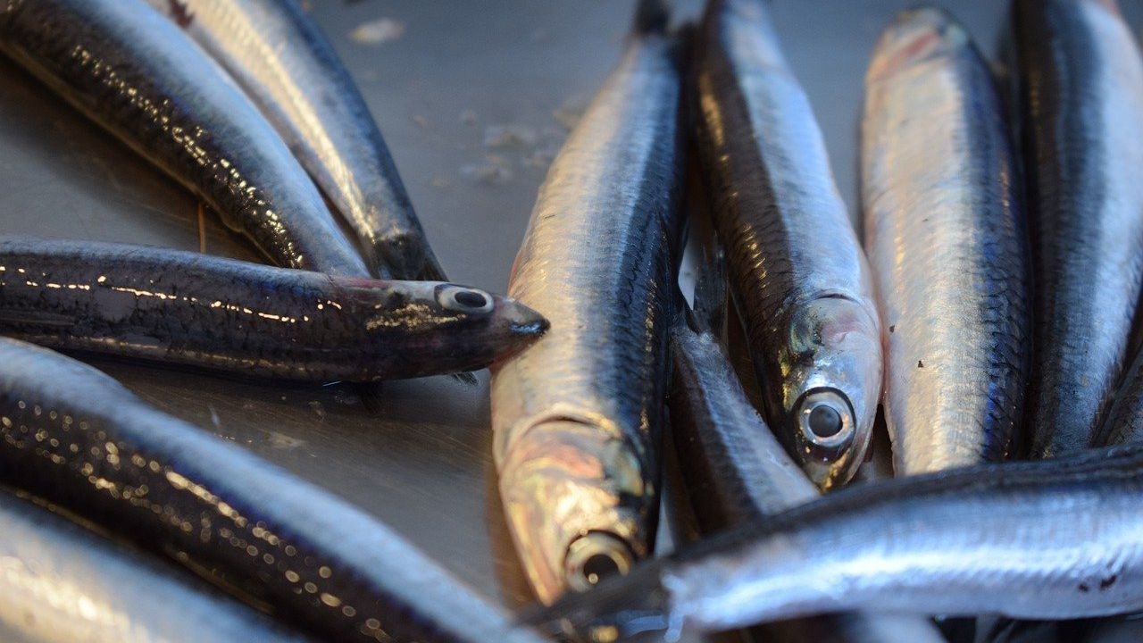 Spanish anchovy canning factory offering a wide range of high quality fish products