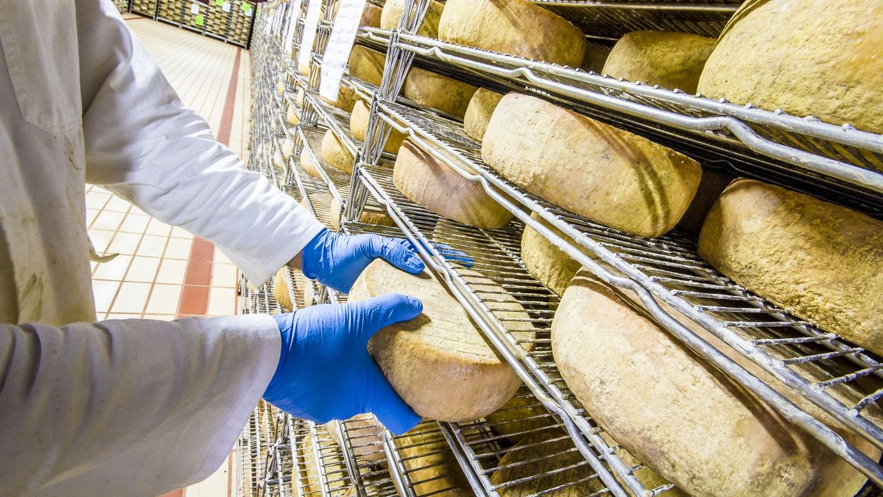 Italian dairy farm seeks distribution partners in the European Union