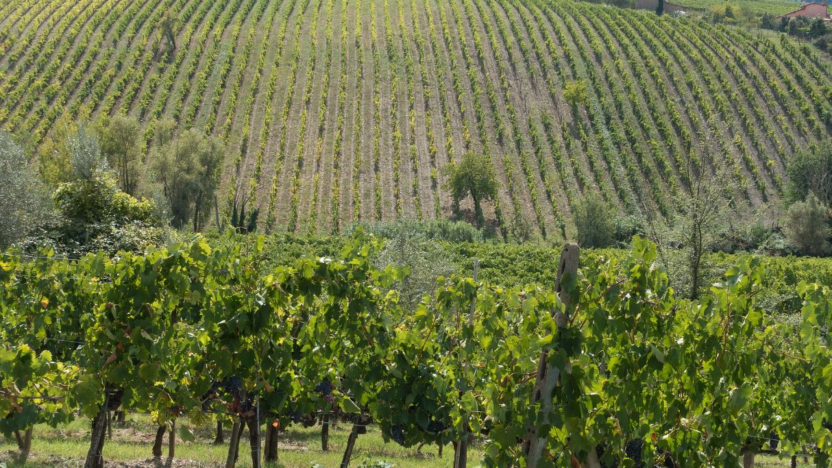Winery located in Chianti area looks for wine distributors and importers