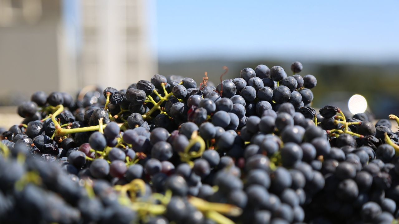 French winery seeks international distributors and agents