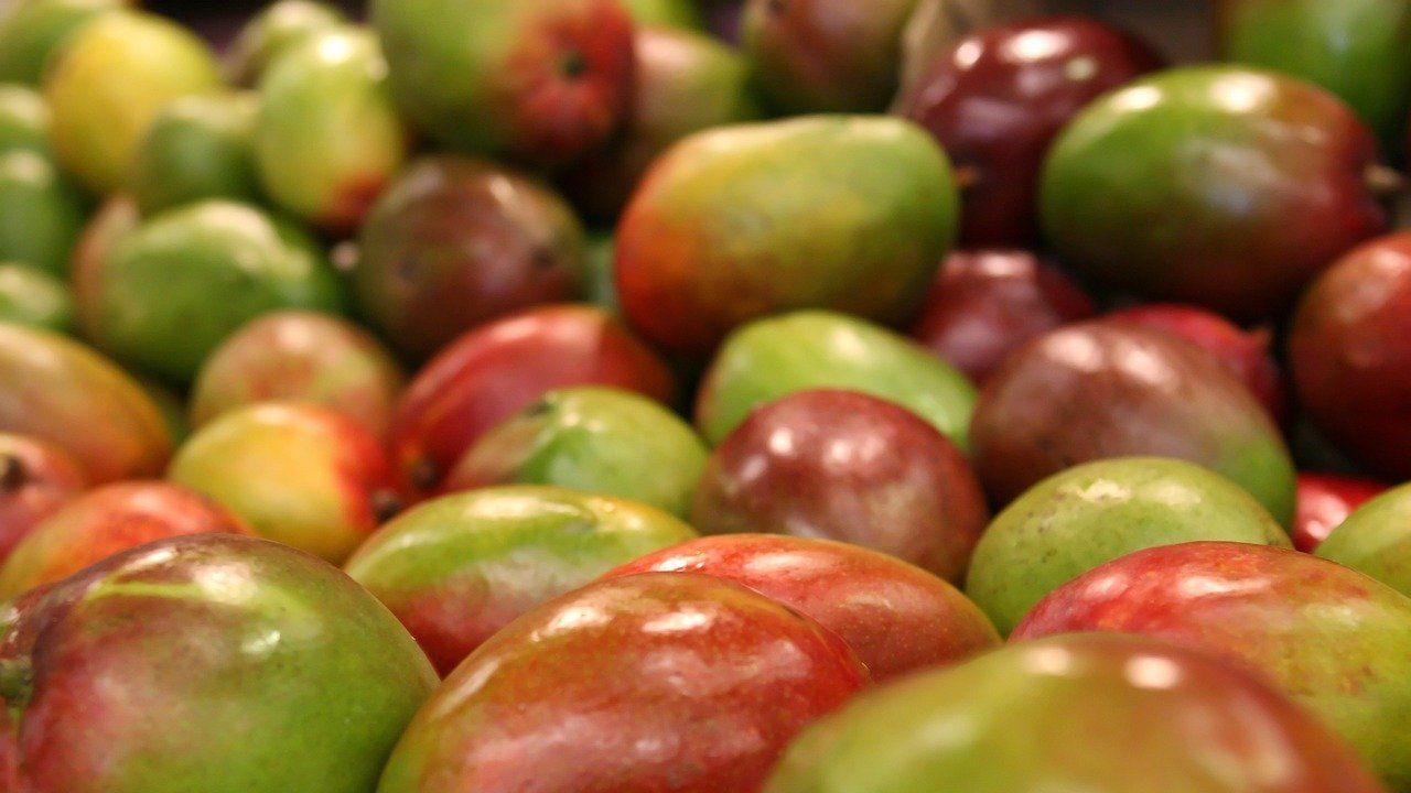Peruvian processor and marketer of superfoods seeking distributors in Europe