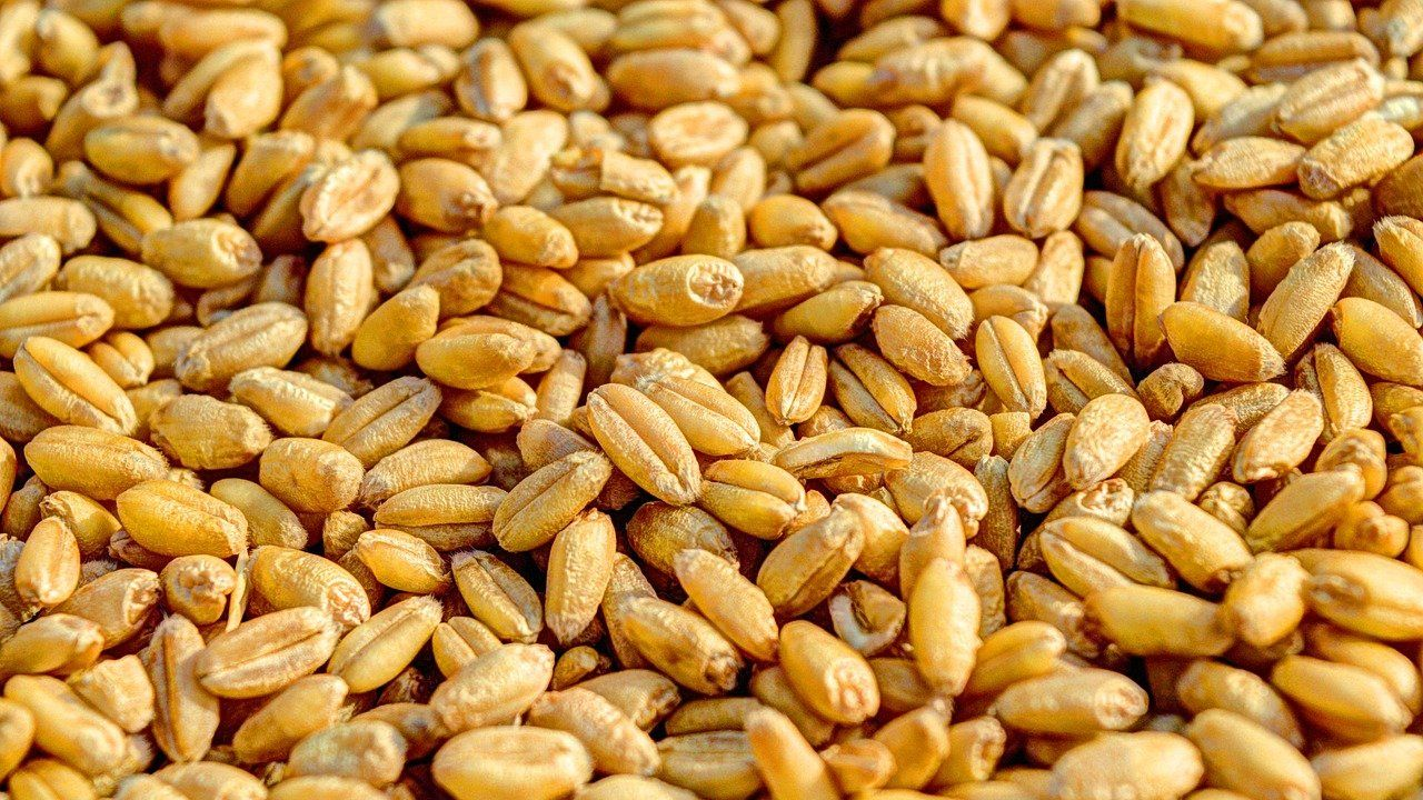 Organic grain, cereals and beans from Ukraine: looking for partners and agents