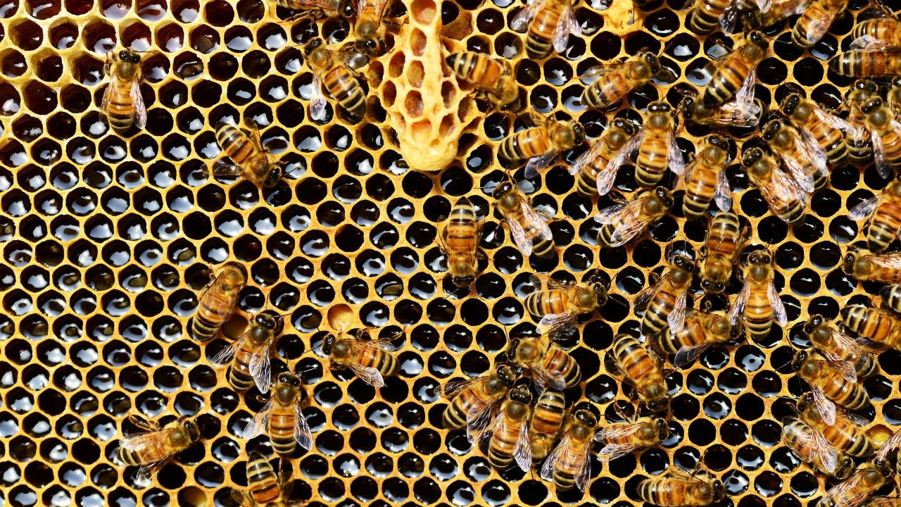 Producer of bee food nutrition is looking for partners