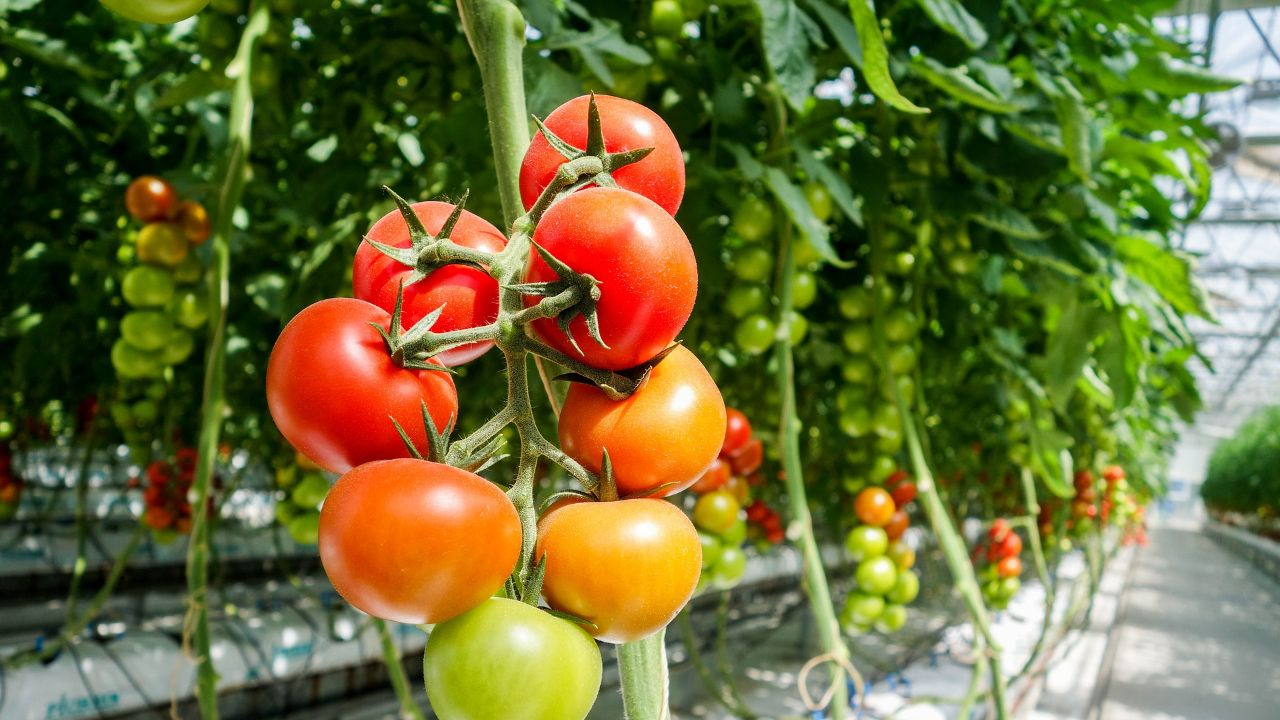 Offering accessories for greenhouses to international distributors