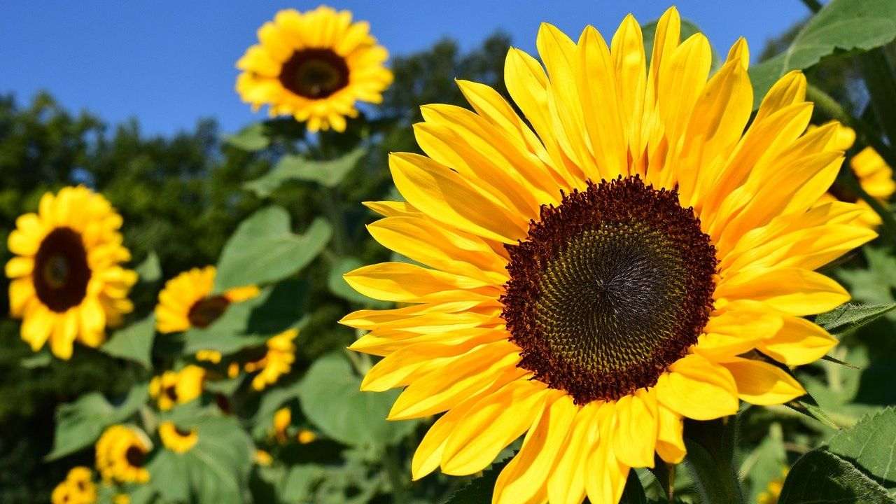 Ukrainian enterprise offers deoiled sunflower lecithin powder under distribution services