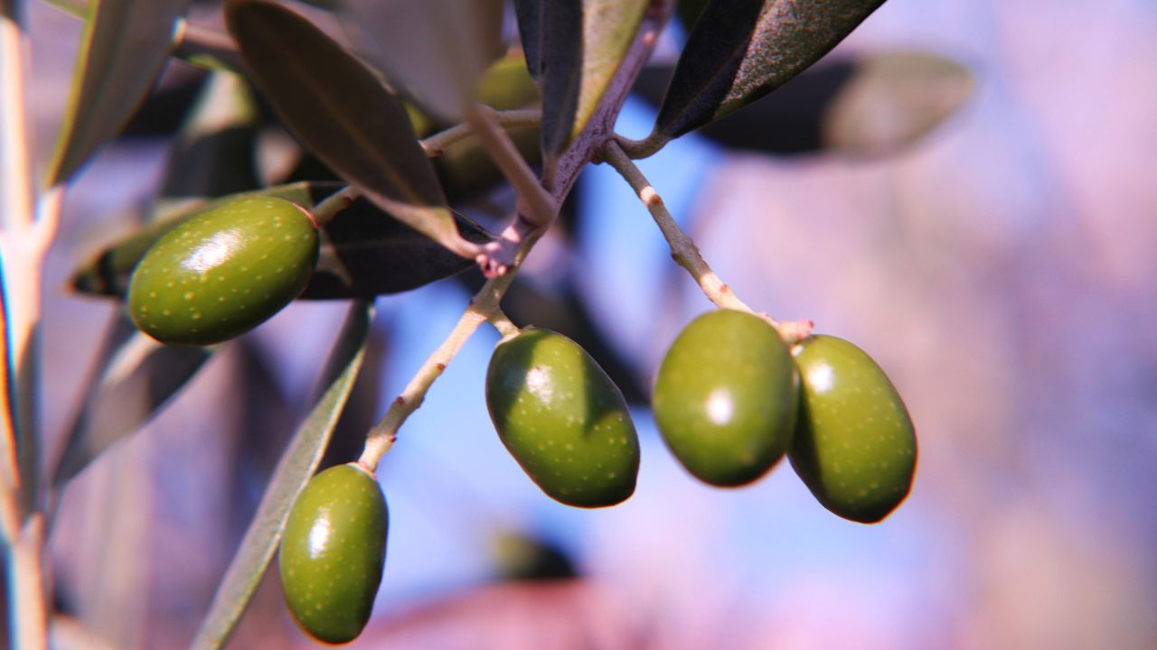 Offering Italian olive oil and vinegard