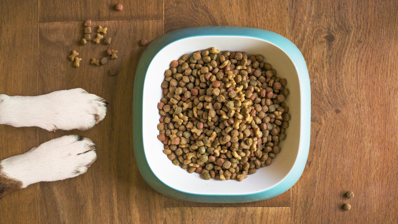 Looking for importer of high-quality pet food made in Belgium