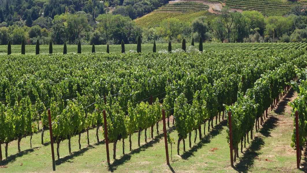 Offering Italian wine to foreign distributors